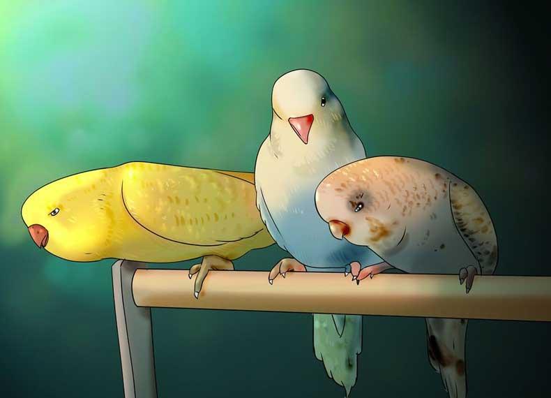 راهنمای خرید پرنده