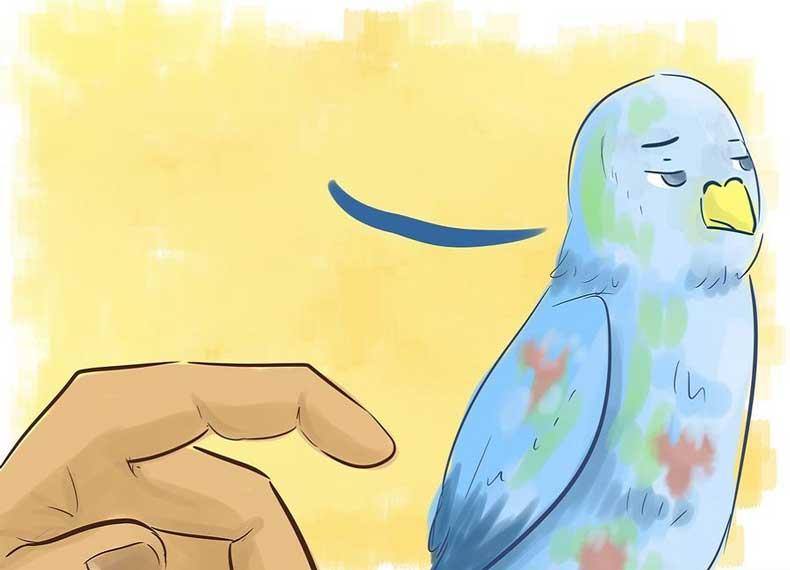 درمان مرغ عشق مریض