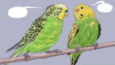 آموزش صحبت کردن به مرغ عشق