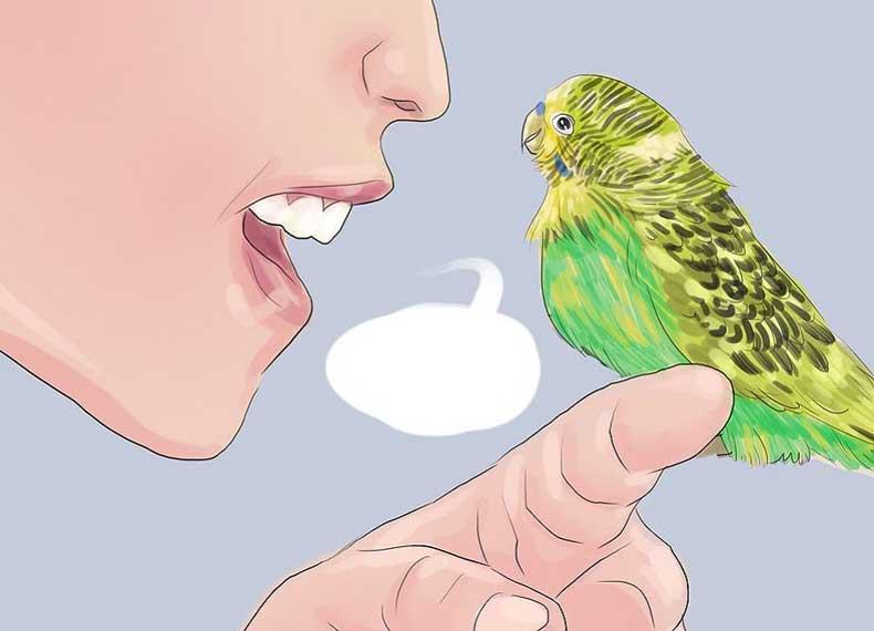 تمرین صحبت کردن با مرغ عشق