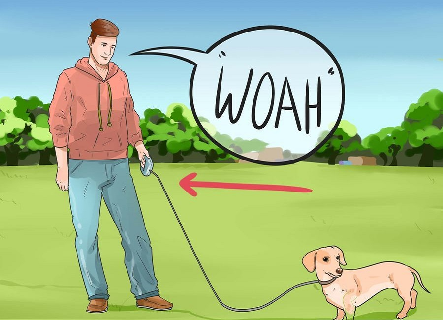 سگ بگیر