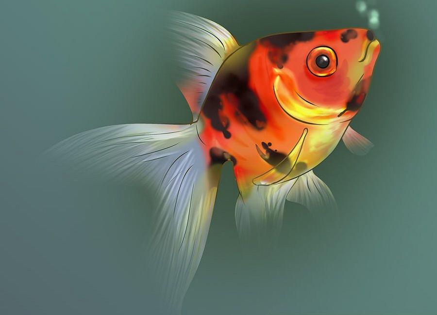 ماهی قرمز خوب