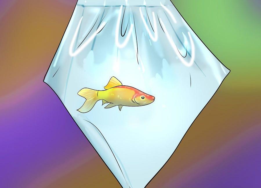 ماهی قرمز خرید