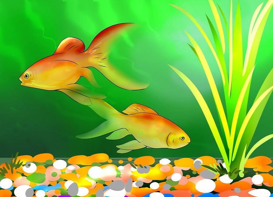 تنگ ماهی قرمز