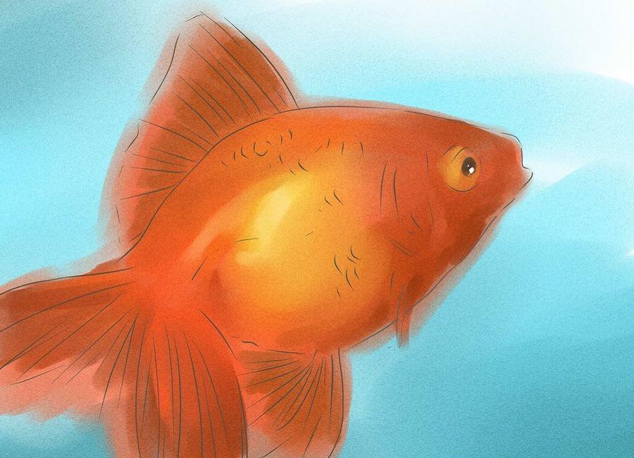 جنسیت ماهی