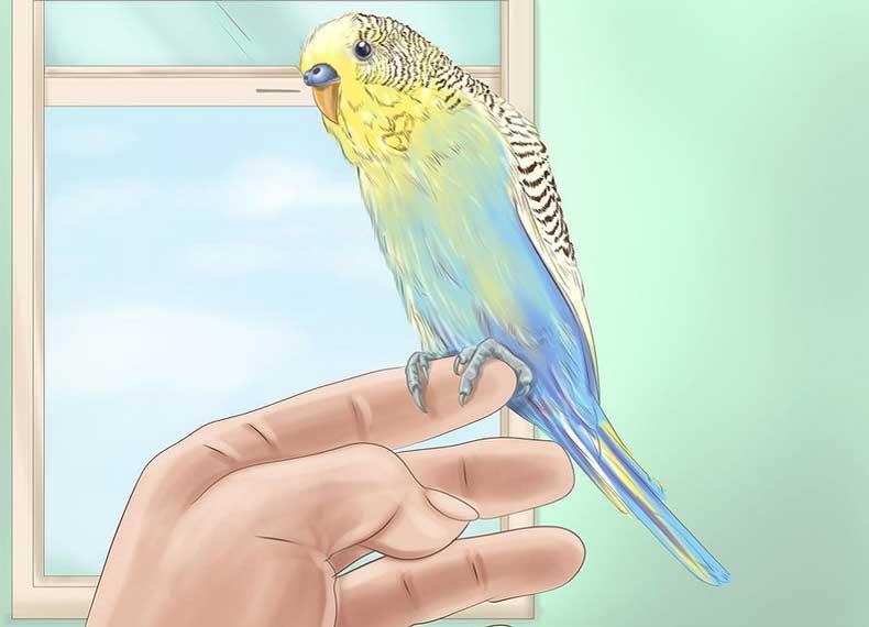 تشخیص مرغ عشق سالم