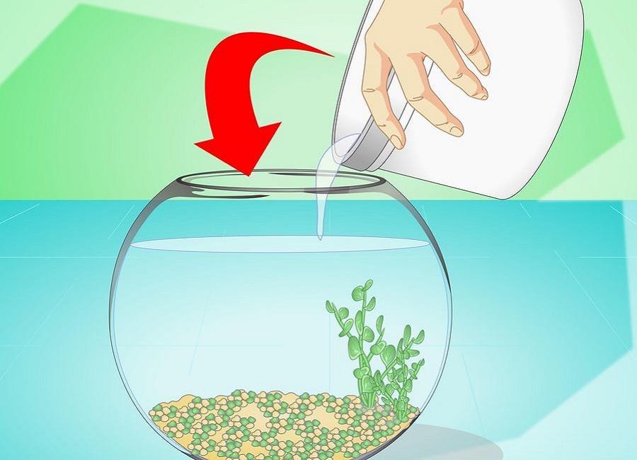 برگرداندن ماهی به آب