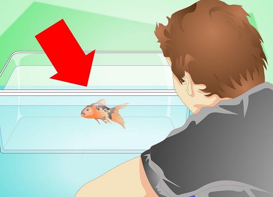 عوض کردن ماهی
