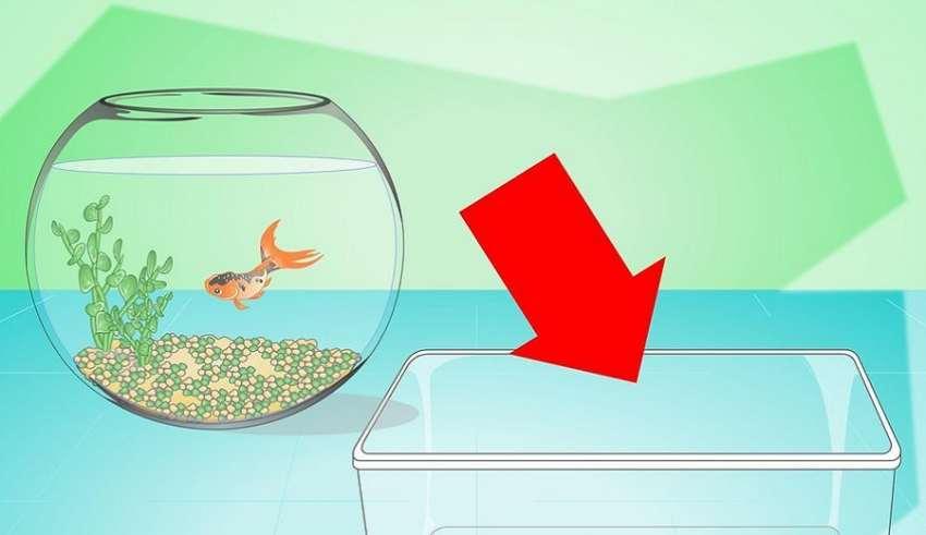 Strange fish bowl