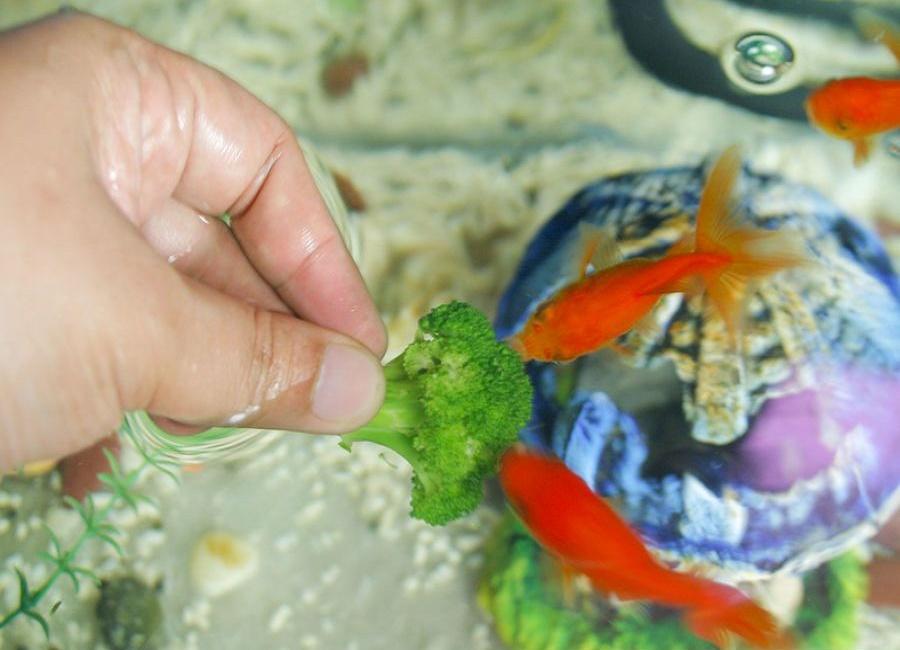 غذای مناسب ماهی