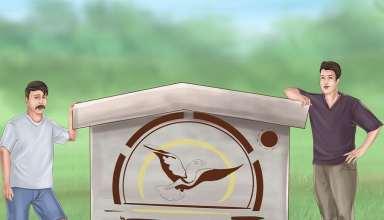 دستی کردن کبوتر