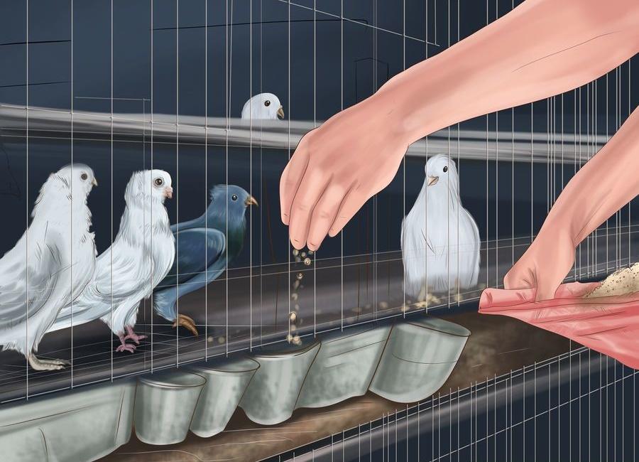 چه کبوتری بخریم