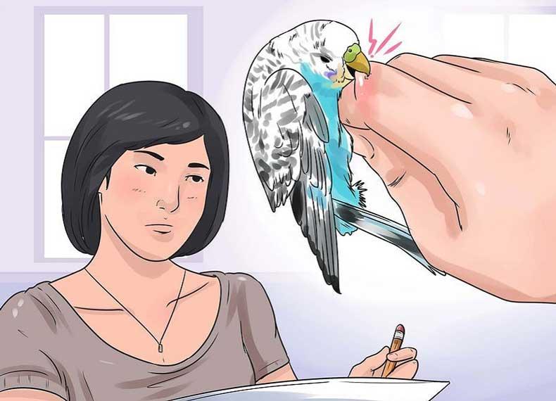 درمان گاز گرفتن مرغ عشق