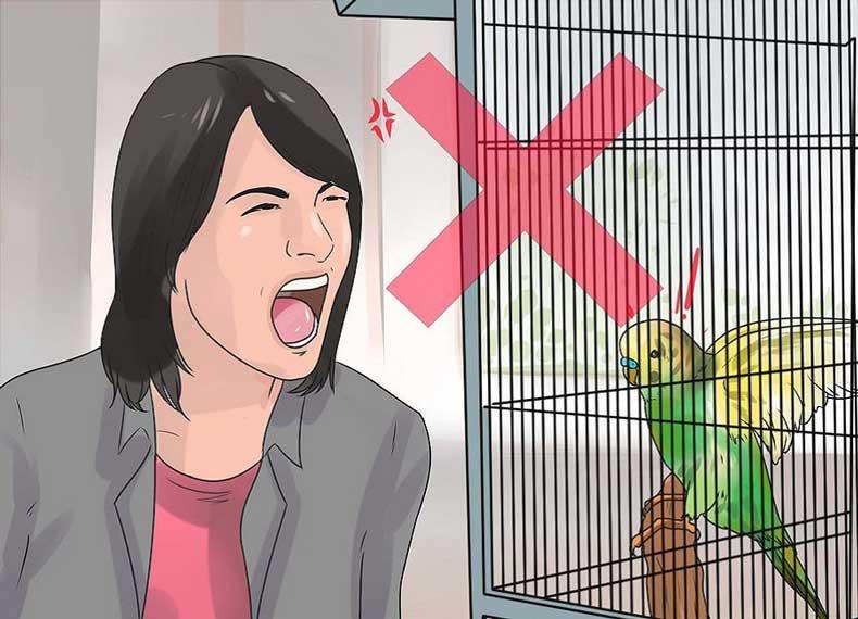 درمان گاز گرفتن مرغ شق