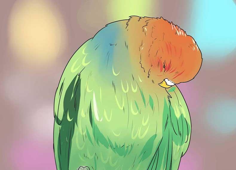 مرغ عشق تمیز