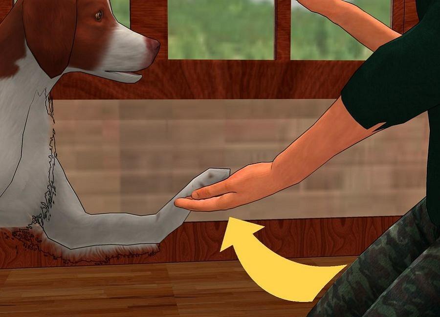 یادگیری سگ