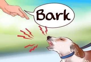 پارس کردن بی مورد سگ