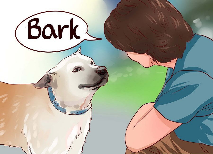 عکس پارس کردن سگ