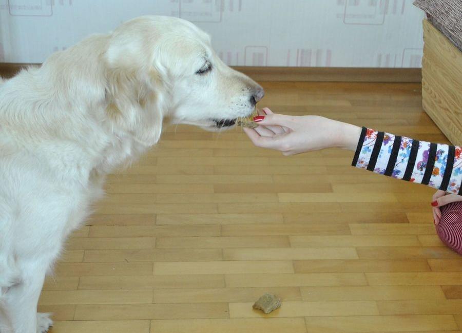 بندازش سگ