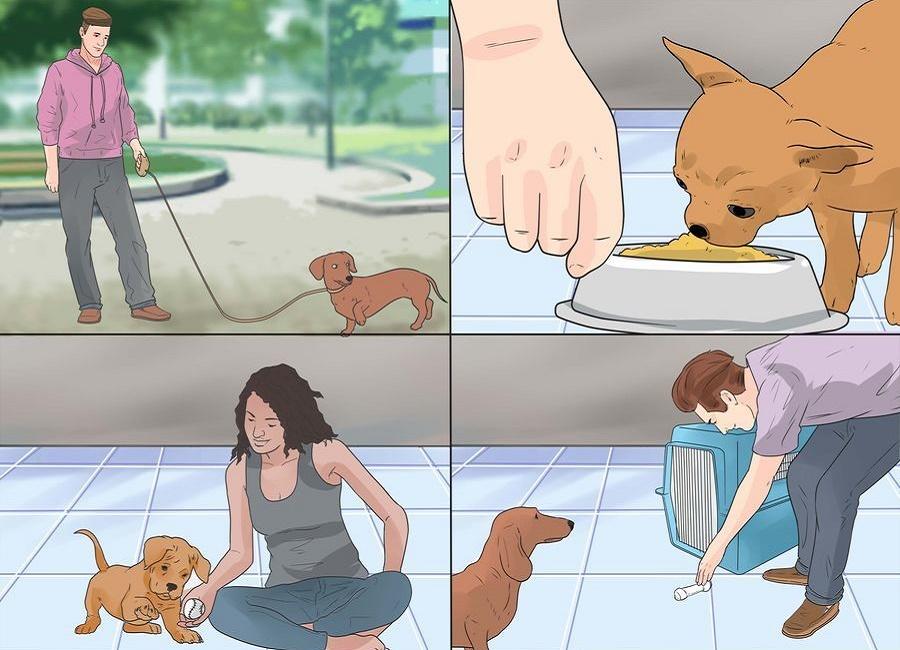 توله سگ