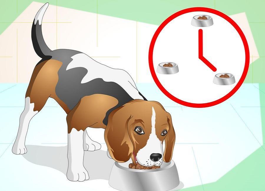 دستشویی سگ