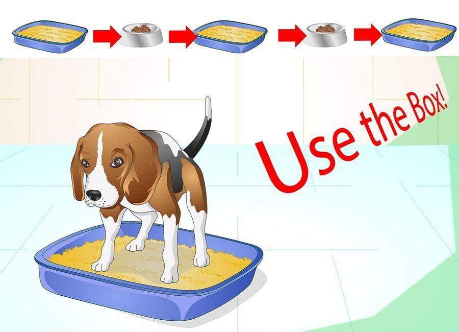 استفاده از دستشویی سگ