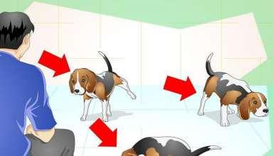 آموزش محل ادرار و دستشویی به سگ