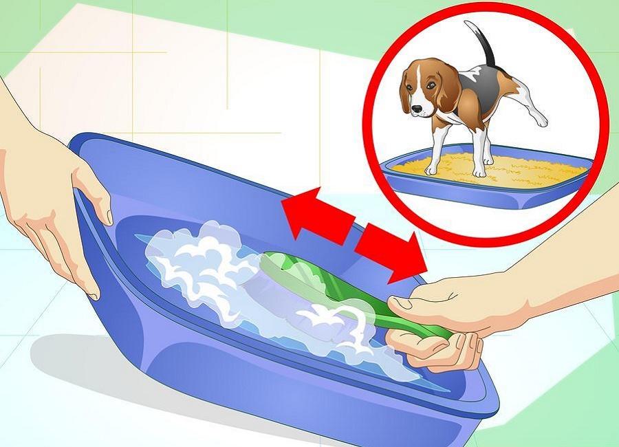 تمرین دستشویی سگ