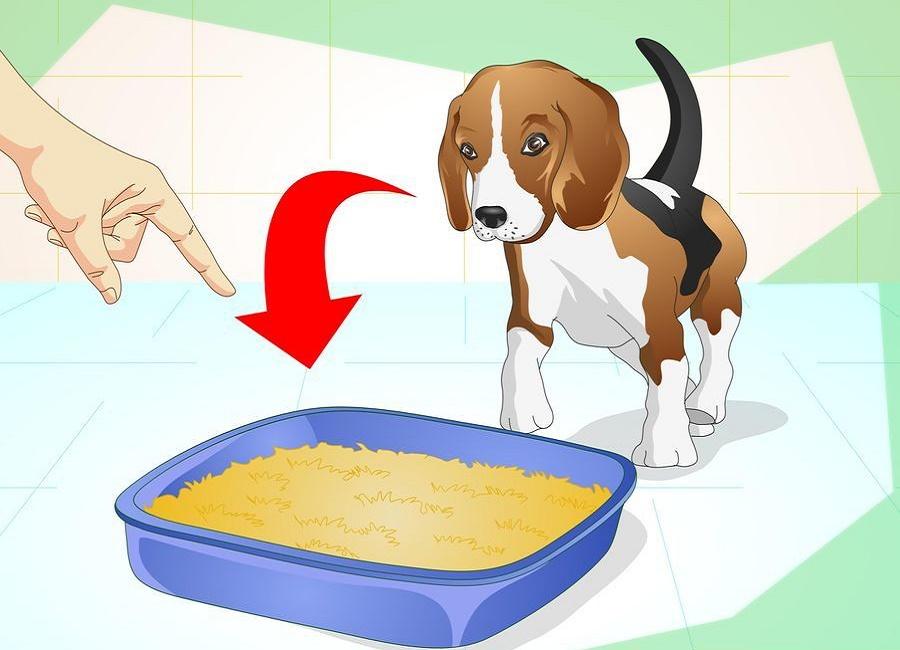 تربیت سگ برای توالت