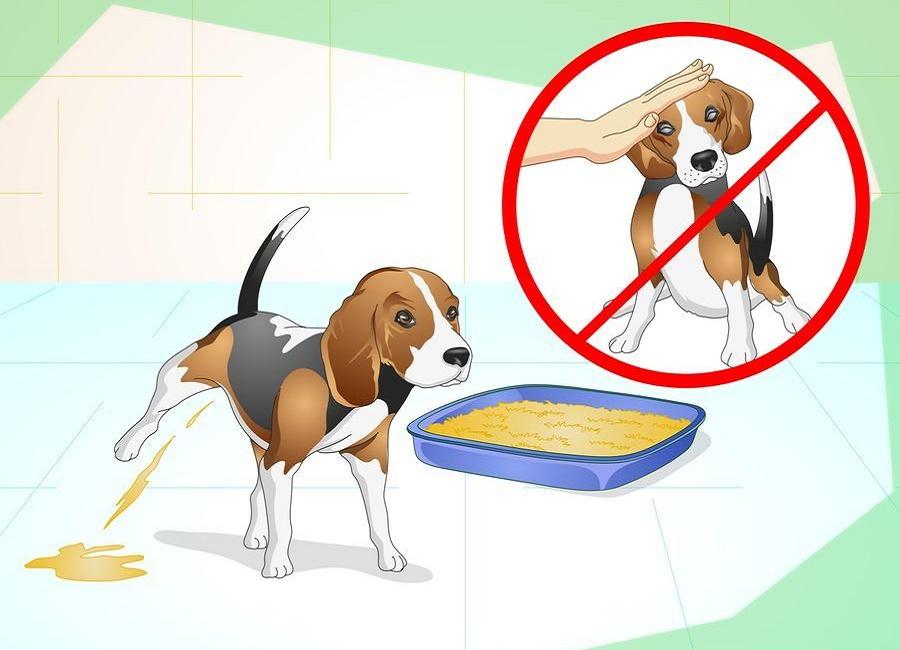 آموزش ادرار به سگ