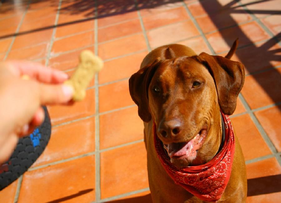 جایزه دادن به سگ