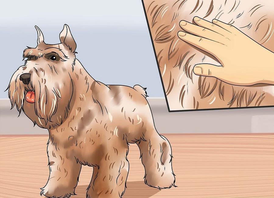 موی سگ