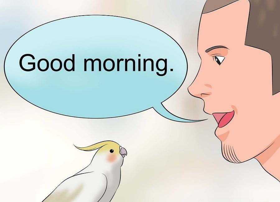 صبح بخیر عروس هلندی