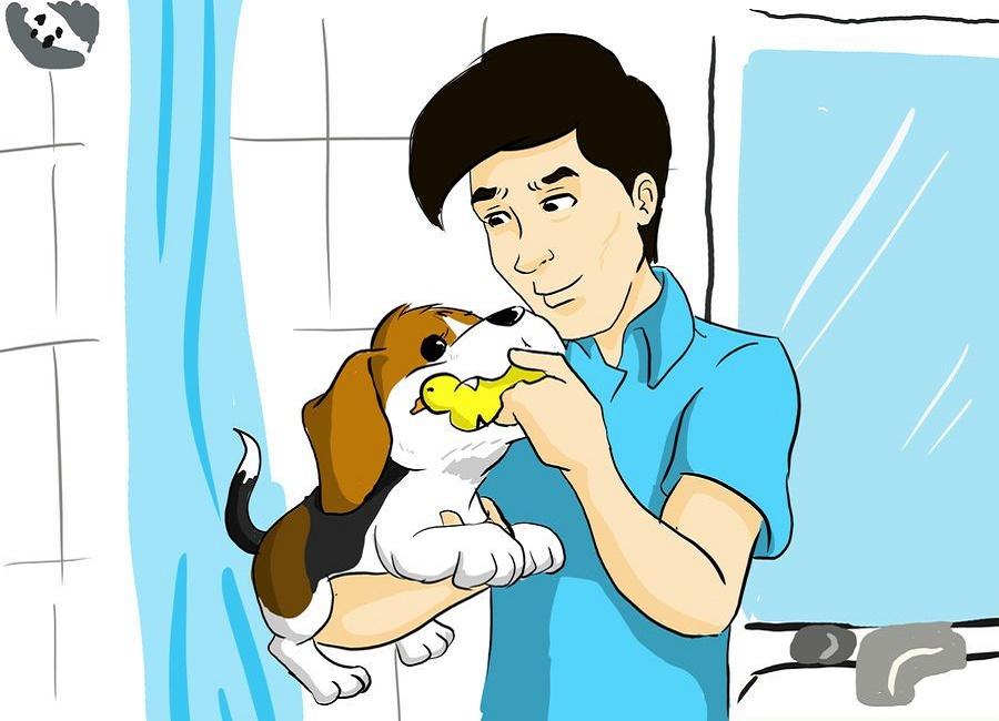 راهنمای خرید سگ