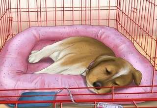 آموزش خوابیدن به سگ