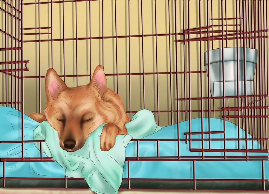 مشکل خواب سگ