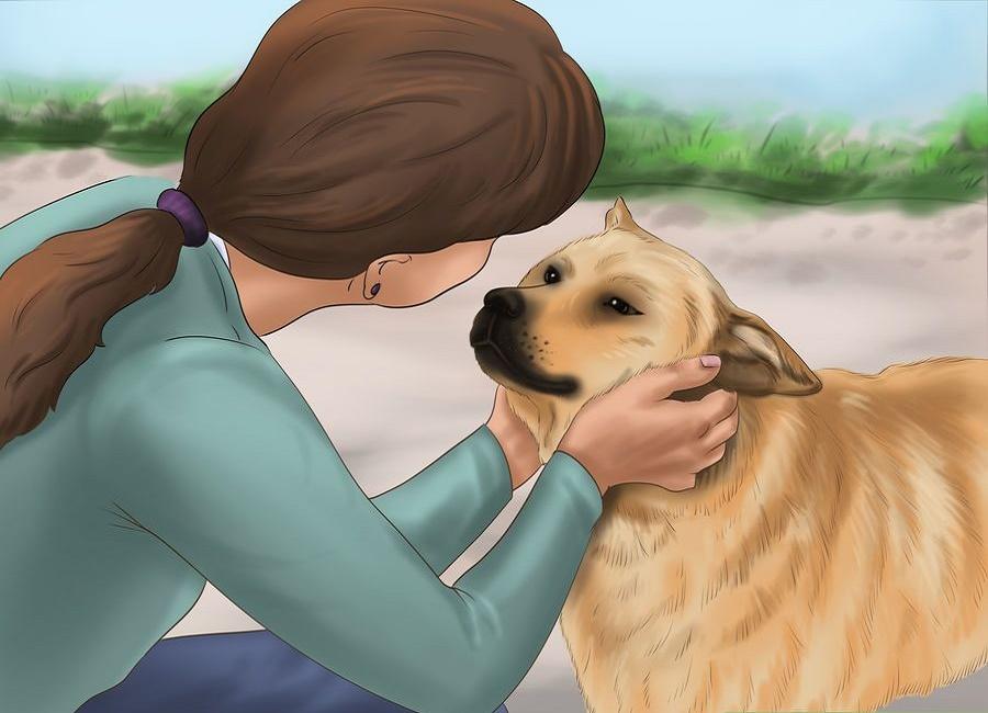 اصلاح خواب سگ