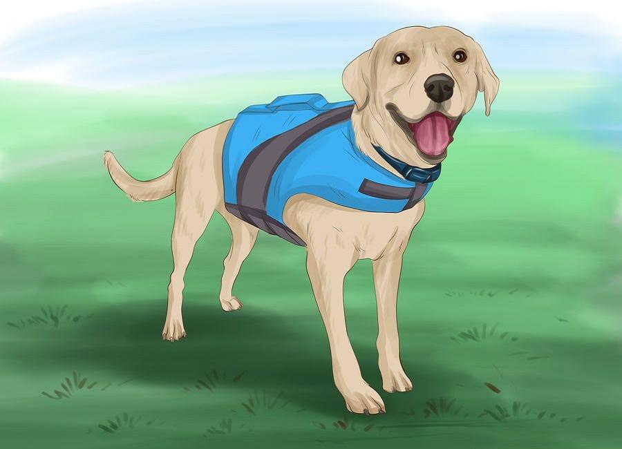 پلیور سگ