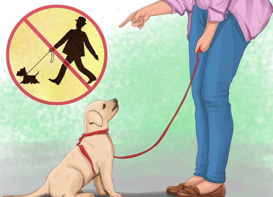 پیاده روی با سگ
