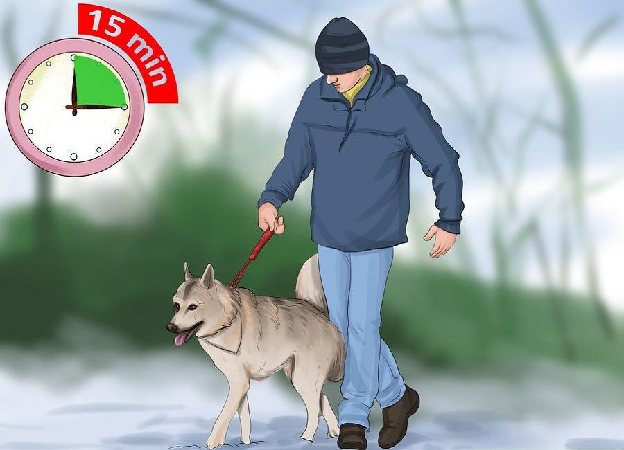 پیاده روی در سرما با سگ