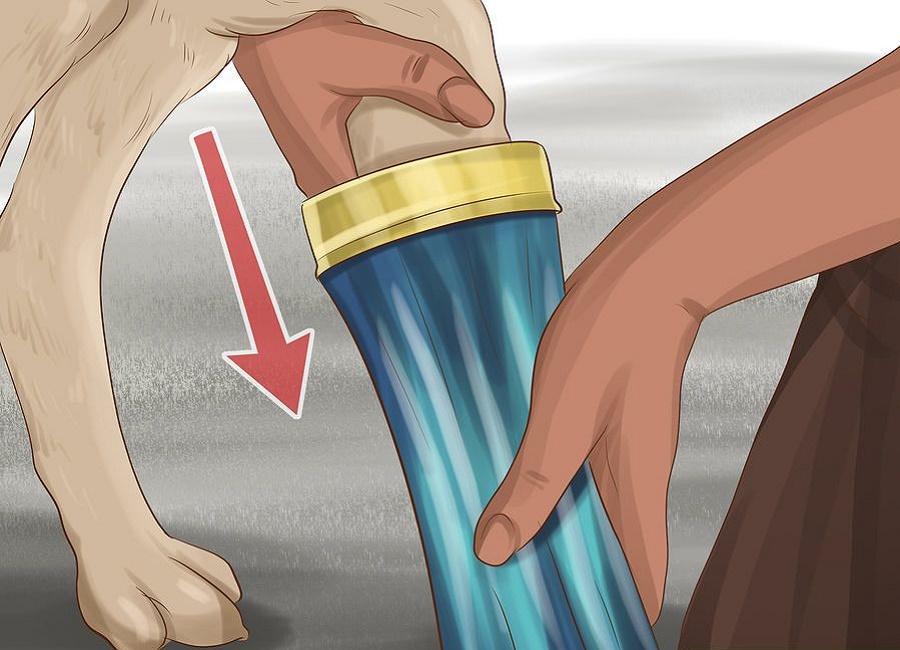 تمیز کردن سگ