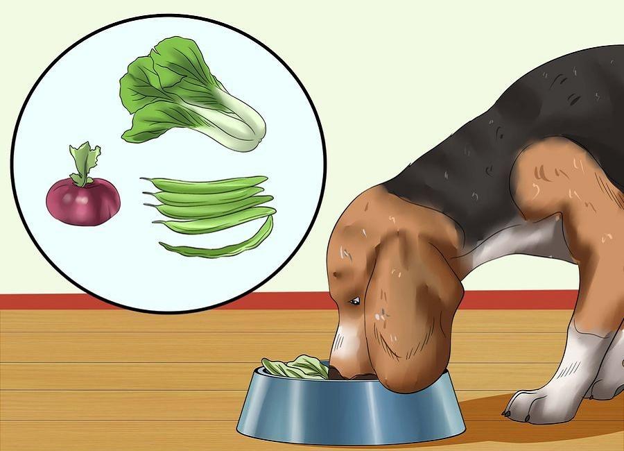 زیاد غذا خوردن سگ