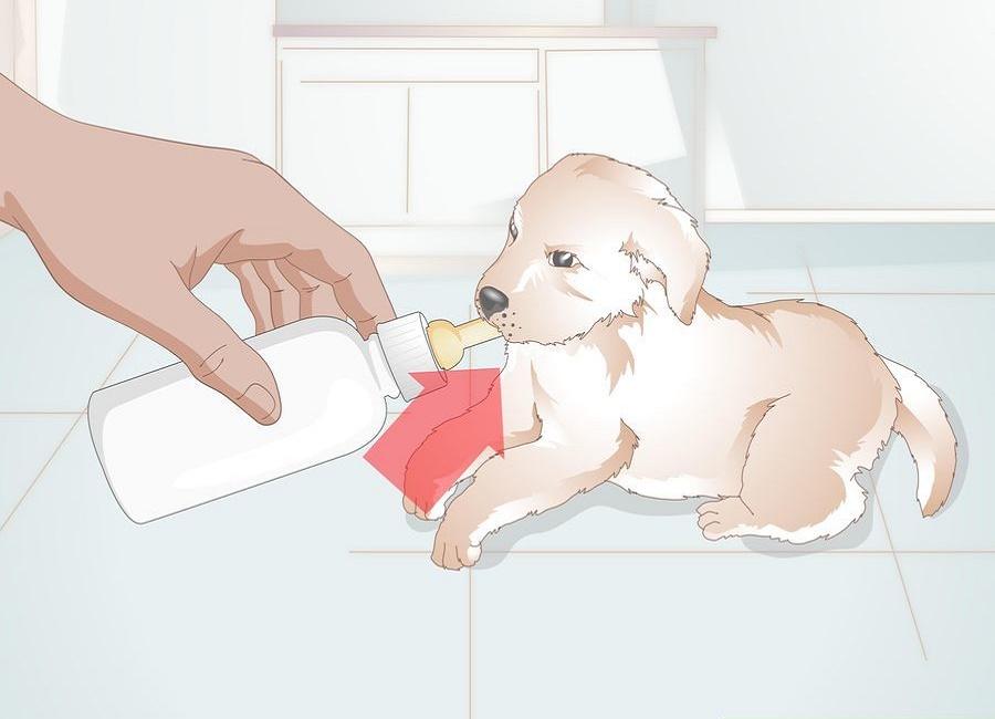 شیر دادن یه توله سگ