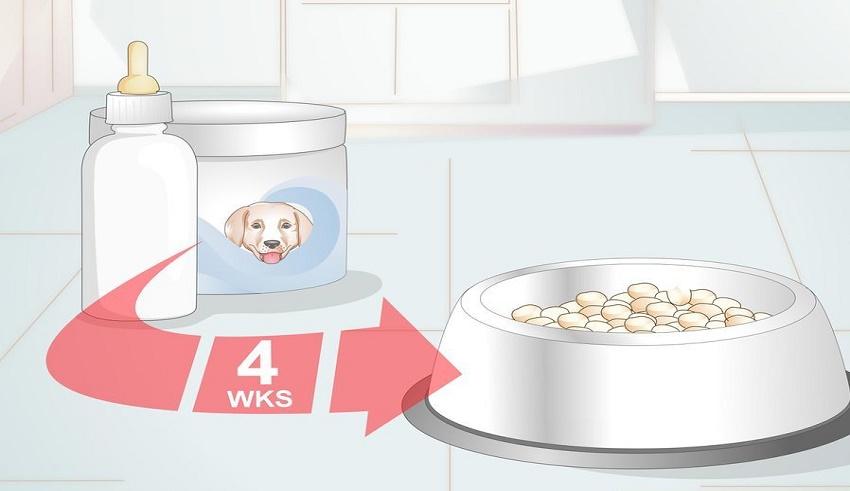 غذا دادن به توله سگ
