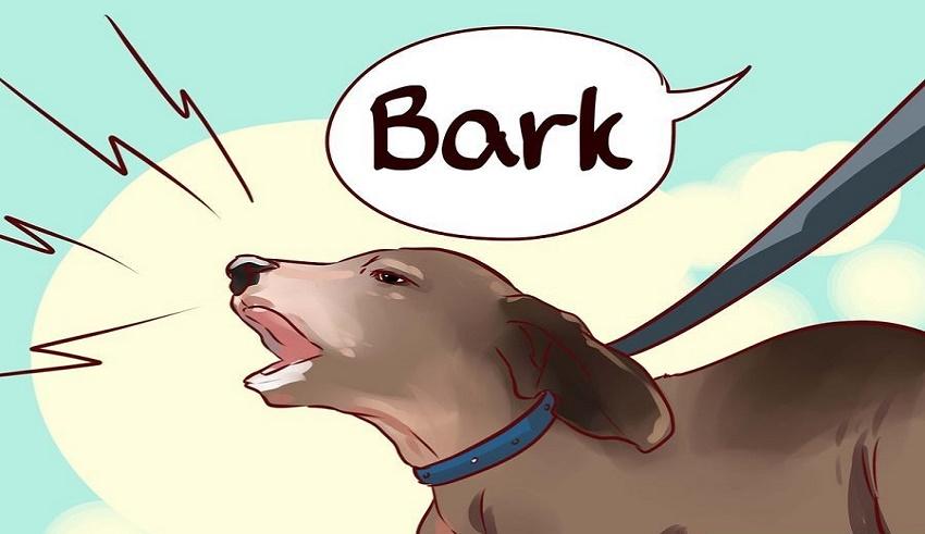 آموزش پارس کردن به سگ