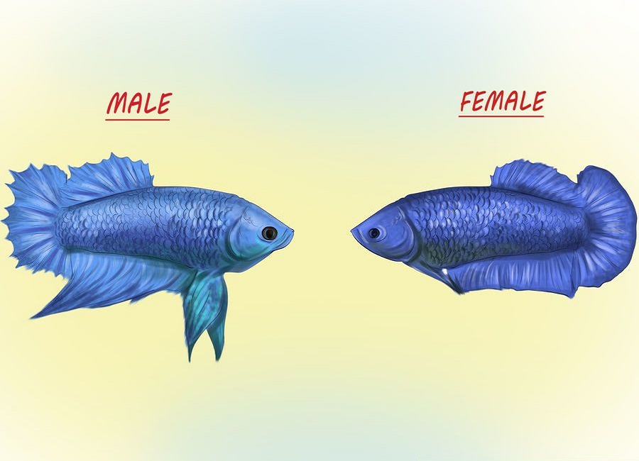 فرق ظاهری فایتر نر با ماده