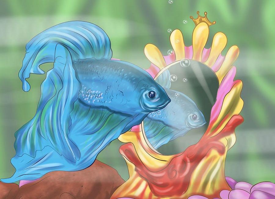 تست جنسیت ماهی فایتر