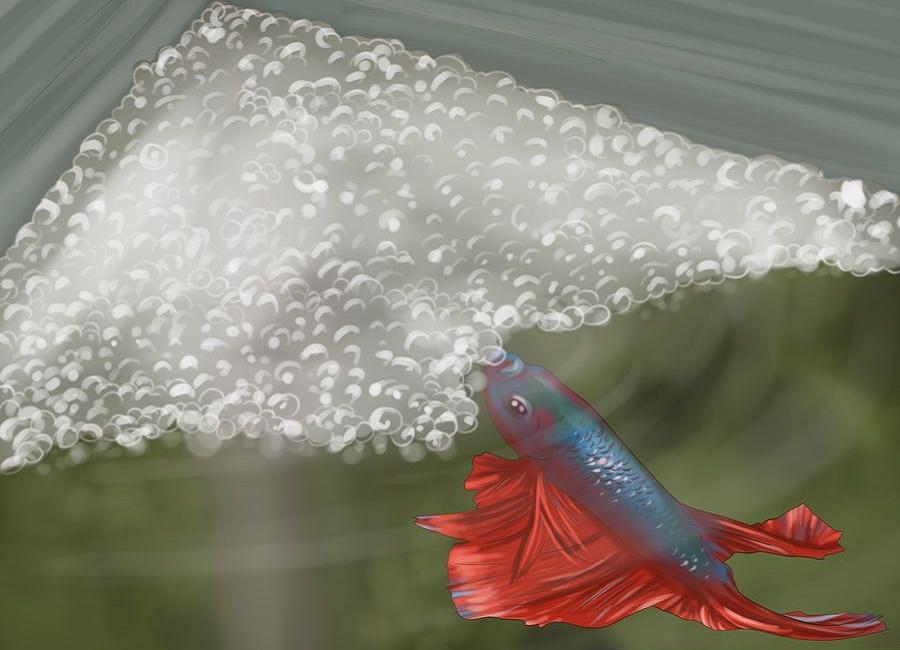 نقاشی ماهی