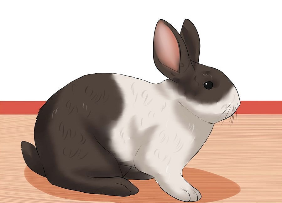 سن مناسب خرگوش
