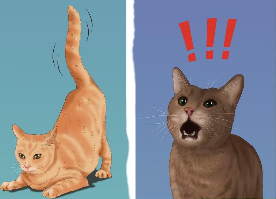 عکس گربه